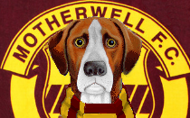 Motherwell News Hound